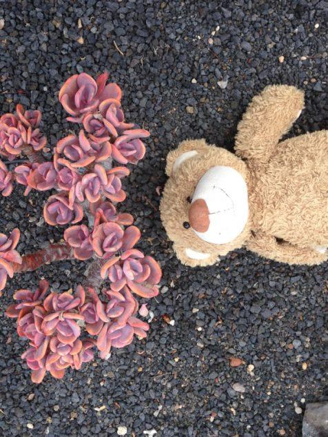 Teddy in Tenriffa