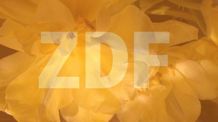 ZDF talkshow mit Blumen veredelt